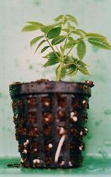 jeune_plant